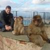 Scimmie di Gibilterra: io sono l'ultimo!