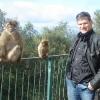Scimmie di Gibilterra