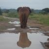 Kimana Park Safari, elefante