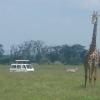 Kimana Park Safari, giraffe