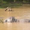 Kimana Park Safari, ippopotami