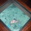 Al Sofitel, vista dal pavimento dell'overwater bungalow 116