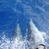Parco marino La Galite, delfini
