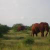 Tsavo East Park Safari, elefanti rossi