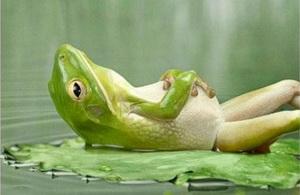 ranocchia-rilassata1